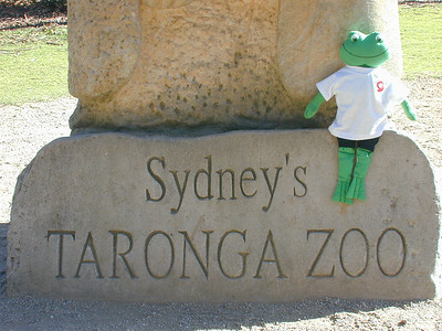 Poggy the Froggy enjoying a day out at Sydney's Taronga Zoo. If someone is going somewhere that is interesting, Poggy, a student in Ms. Nora's classroom, likes to go.