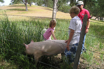 Nathan Roth showing off his pig to Sydney and Pat Kane.