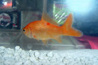 """Sydney Kane's fish, """"Lower,"""" because it stays lower than Christopher fish, """"Higher."""""""