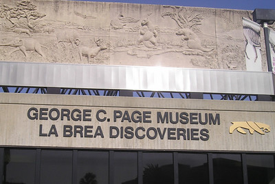 With KK in Beverly Hills for business, we headed to LA for a visit and to go to the George C. Page Museum at the La Brea Tar Pits.