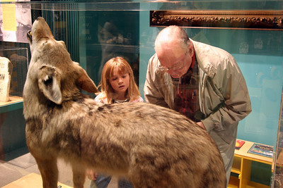 Papa and Sydney checking out a stuffed coyote at the Fort Collins Museum.