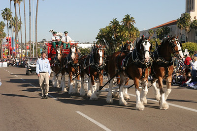 Budweiser Clydesdales pulling a beer wagon in the 2006 Port of San Diego Big Bay Balloon Parade