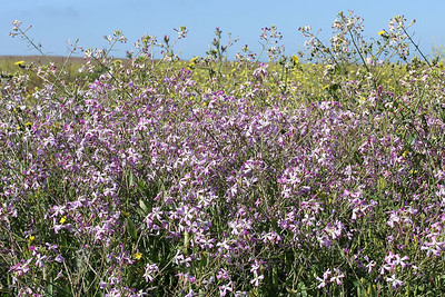 There was an abudance of wildflowers in Montaña de Oro State Park.