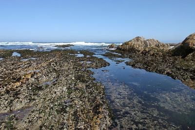 Corallina Cove tide pool at Montaña de Oro State Park.