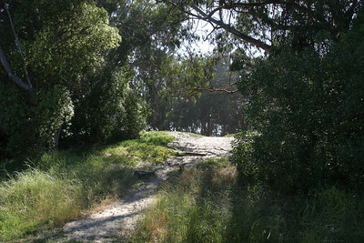 The view from our North Beach camp site at Pismo State Beach was into this beautiful Eucalyptus grove.