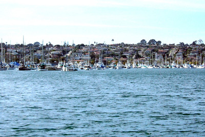 An enjoyable day was spent whale watching and cruising the San Diego Bay aboard Tom and Jane O'Dea's boat, the Standard Bet, which is a Larson 330 Cabrio.
