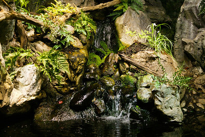 National Aquarium in Baltimore (Image taken with Canon EOS-1DS at ISO 800, f5.0, 1/125 sec and 42mm)