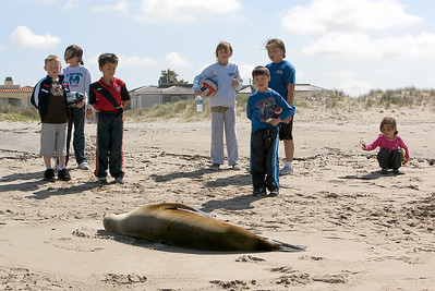 The kids looking at a sick sea lion that has washed ashore at Oxnard Beach. Unfortunately, it is very sick and barely able to move. (Image taken with Canon EOS-1D at ISO 200, f8.0, 1/400 sec and 70mm)