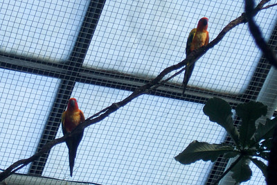 Parrots at the National Aquarium in Baltimore (19 Oct 2008). (Image taken with FinePix F10 at ISO 200, f5.0, 1/340 sec and 24mm)