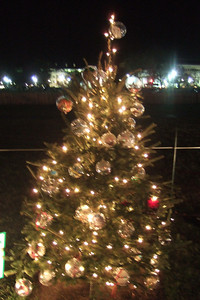 State of California Christmas Tree at The Ellipse.