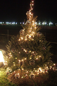 State of Colorado Christmas Tree at The Ellipse.