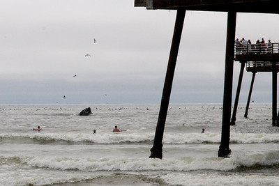 A humpback whale just off the pier in Pismo Beach (01 Aug 2009) (Image taken with Canon EOS 20D at ISO 400, f20.0, 1/1250 sec and 70mm)