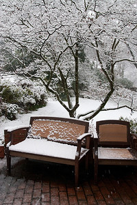 View from the sunroom into the backyard during the first snow of the year. (Image taken by Kathy T. Kane on 05 Dec 2009 with Canon EOS 20D at ISO 400, f7.1, 1/160 sec and 23mm)
