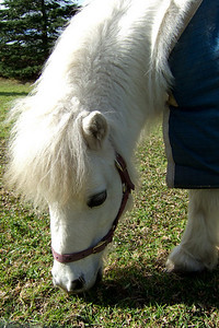 Sydney liked the Shetland ponies at Nowra Wildlife Park (Image taken by Sydney J. Kane with FinePix F10 at ISO 80, f4.5, 1/340 sec and 8mm)