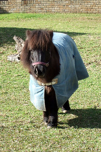 Sydney liked the Shetland ponies at Nowra Wildlife Park (Image taken by Sydney J. Kane with FinePix F10 at ISO 200, f5.0, 1/419 sec and 24mm)