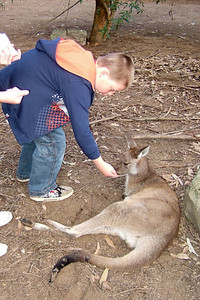 Christopher feeding a kangaroo at the Nowra Wildlife Park (08 Jul 2009) (Image taken by Kathy T. Kane with FinePix F10 at ISO 400, f2.8, 1/160 sec and 8mm)