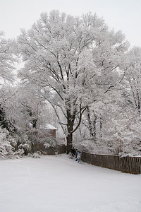 We had several inches of snow on Wednesday, February 3rd, which was followed a couple of days later with over two feet of snow! (Image taken by Kathy T. Kane on 03 Feb 2010 with Canon EOS 20D at ISO 800, f10.0, 1/250 sec and 17mm)