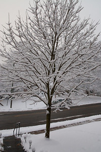 We had several inches of snow on Wednesday, February 3rd, which was followed a couple of days later with over two feet of snow! (Image taken by Kathy T. Kane on 03 Feb 2010 with Canon EOS 20D at ISO 800, f10.0, 1/400 sec and 17mm)