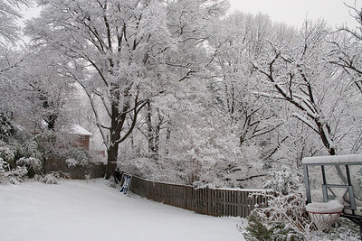 We had several inches of snow on Wednesday, February 3rd, which was followed a couple of days later with over two feet of snow! (Image taken by Kathy T. Kane on 03 Feb 2010 with Canon EOS 20D at ISO 800, f9.0, 1/320 sec and 17mm)