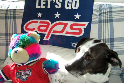 Dolly and Rainbow Bear are ready for some Caps hockey action (Image taken by Kathy T. Kane on 27 Nov 2010 with FinePix F10 at ISO 200, f2.8, 1/200 sec and 8mm)