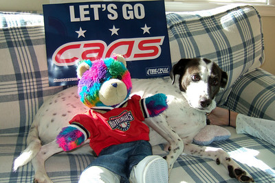 Dolly and Rainbow Bear are ready for some Caps hockey action (Image taken by Kathy T. Kane on 27 Nov 2010 with FinePix F10 at ISO 200, f2.8, 1/180 sec and 8mm)
