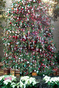 Christmas Tree on display at the U.S. Botanic Garden. (Image taken by Sydney J. Kane on 28 Nov 2010 with FinePix F10 at ISO 800, f2.8, 1/45 sec and 8mm)
