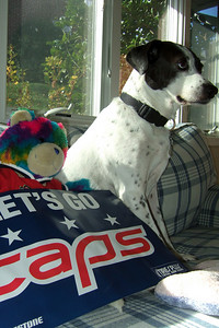 Dolly and Rainbow Bear are ready for some Caps hockey action (Image taken by Kathy T. Kane on 27 Nov 2010 with FinePix F10 at ISO 200, f4.0, 1/280 sec and 8mm)