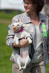 Getting ready for the Jack Russell terrier races at the 86th running of the Virginia Gold Cup steeplechase race at Great Meadow in The Plains, Virginia (Image taken by Patrick R. Kane on 07 May 2011 with Canon EOS-1D Mark II at ISO 400, f2.8, 1/8000 sec and 200mm)