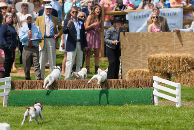 Jack Russell terrier races at the 86th running of the Virginia Gold Cup steeplechase race at Great Meadow in The Plains, Virginia (Image taken by Patrick R. Kane on 07 May 2011 with Canon EOS-1D Mark II at ISO 100, f2.8, 1/2000 sec and 200mm)