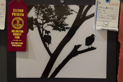 Meredith's 'Bird on a Tree' photo won a Second Premium for a teen B&W animal photo at the 2012 Arlington County Fair. Photography (Department VI), Teen (Division T), Black and White (Section C), Animal(s) (Class 830). (Image taken by Patrick R. Kane on 12 Aug 2012 with Olympus XZ-1)