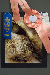 Meredith's photo was recognized as a Reserve Champion at the 2012 Arlington County Fair. Photography (Department VI), Teen (Division T), Color (Section D), Animal(s) (Class 844). (Image taken by Patrick R. Kane on 12 Aug 2012 with Olympus XZ-1)