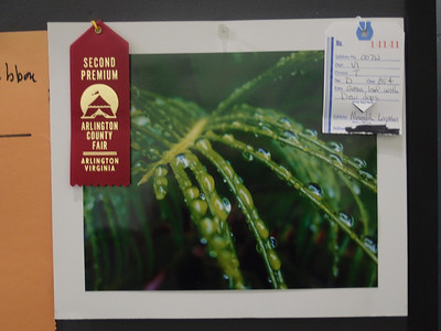 Meredith's 'Green Leaf with Dew Drops' photo won a 2nd Premium Ribbon at the 2012 Arlington County Fair (Image taken by Patrick R. Kane on 11 Aug 2012 with XZ-1 at ISO 200, f2.0, 1/15 sec and 9.9mm)