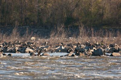 Birds perched on the rocks across the river at Conowingo Dam (Image taken by Patrick R. Kane on 03 Apr 2012 with Canon EOS-1D Mark III at ISO 640, f4.0, 1/2500 sec and 400mm)