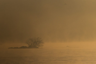 An early morning below Conowingo Dam (Image taken by Patrick R. Kane on 21 Nov 2012 with Canon EOS-1D Mark IV at ISO 800, f5.6, 1/8000 sec and 560mm)