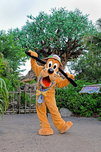 Pluto in front of the Tree of Life at Disney's Animal Kingdom