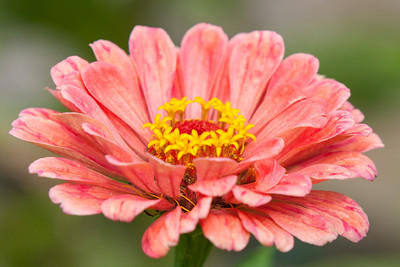 A flower in the cutting garden at Hillwood Estate, Museum & Gardens (Image taken by Patrick R. Kane on 29 Sep 2012 with Canon EOS-1D Mark III at ISO 400, f5.6, 1/500 sec and 160mm)