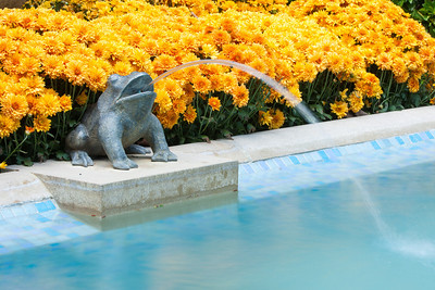 A frog water feature in the French Parterre at Hillwood Estate, Museum & Gardens (Image taken by Patrick R. Kane on 29 Sep 2012 with Canon EOS-1D Mark III at ISO 100, f20.0, 1/0.5 sec and 75mm)