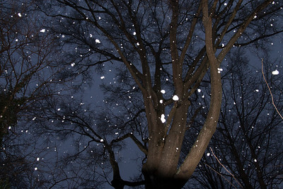 A light dusting of snow in early January (Image taken by Sydney J. Kane on 09 Jan 2012 with Canon EOS 20D at ISO 800, f4.0, 1/60 sec and 17mm)