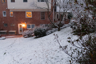 Dolly hiding under the azelia bushes to the right during a light dusting of snow in early January (Image taken by Sydney J. Kane on 09 Jan 2012 with Canon EOS 20D at ISO 800, f2.8, 1/30 sec and 17mm)