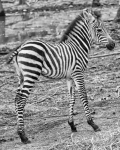 Virginia Safari Park (03 Aug 2013)