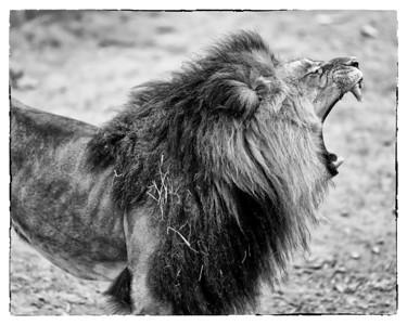 National Zoo (19 Feb 2012)