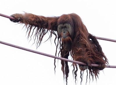 National Zoo (31 Dec 2015)
