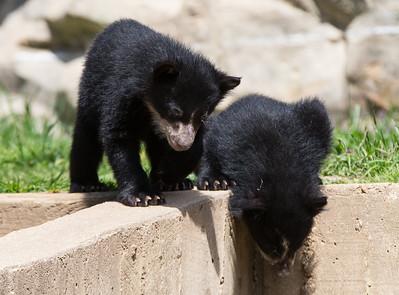 National Zoo (02 Apr 2015)