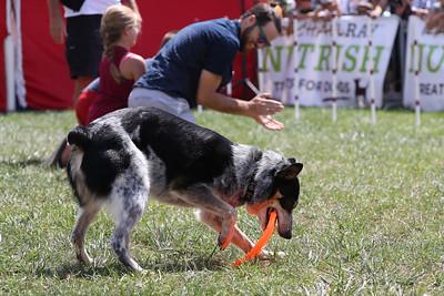 Nutrish Frisbee Dogs (05 Aug 2017)