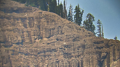 A mountain goat on the side of a mountain northeast of Pebble Creek Campground, Yellowstone National Park, Wyoming. This picture was taken on a phone through a pair of binoculars.