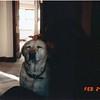 Licks Lizzie 19880224 1