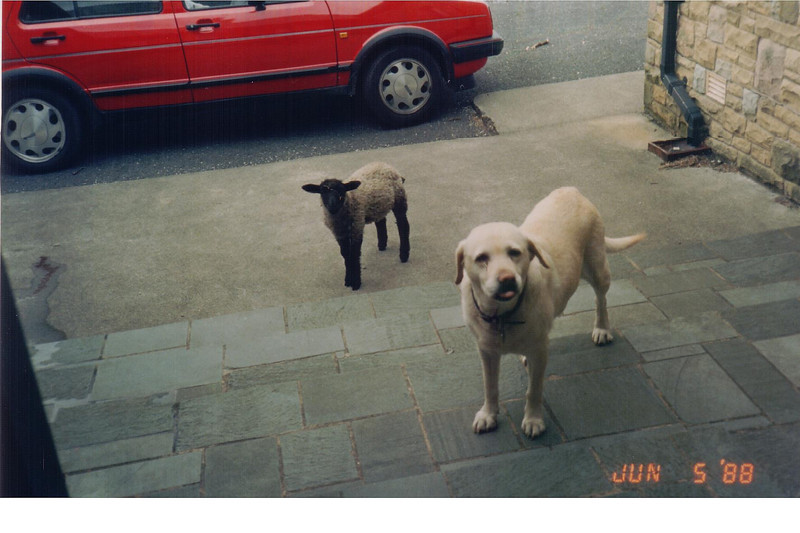 Lamb Licks The Haddocks 1988