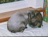 Rabbits 1999
