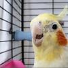Polly Want A....