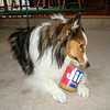 A Dog and His Peanut Butter